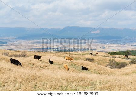 Crows in farm field