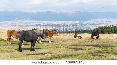 Crowded Horse farm