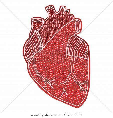 Human heart hand drawn isolated on a white backgrounds in sketch style