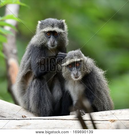 cute baboons in african natural park