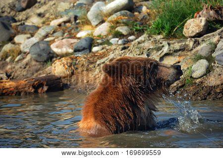 Bear Plunge