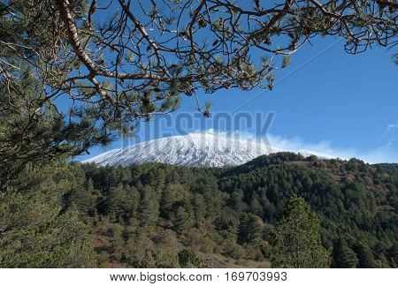 pine forest and snowy top of Volcano Etna, Sicily