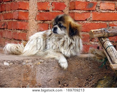 old dog waiting for his owner in the street
