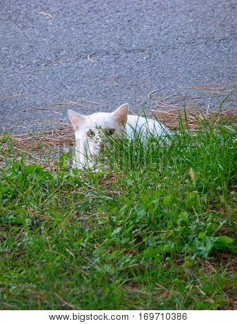 Photo of a white cat hiding in the grass