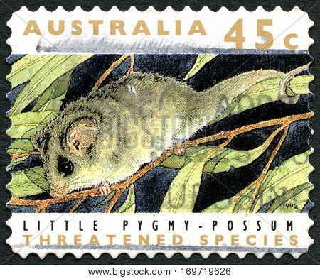 AUSTRALIA - CIRCA 1992: A used postage stamp from Australia depicting an image of a Little Pygmy Possum circa 1992.