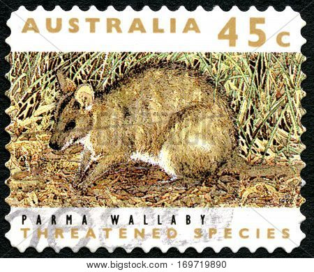 AUSTRALIA - CIRCA 1992: A used postage stamp from Australia depicting an image of a Parma Wallaby circa 1992.