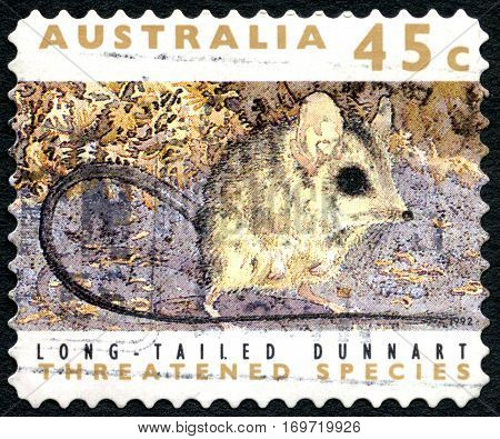 AUSTRALIA - CIRCA 1992: A used postage stamp from Australia depicting an image of a Long Tailed Dunnart circa 1992.