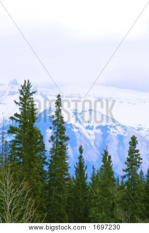 Landscape of high snowy mountains with evegreen trees poster