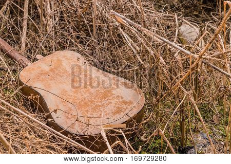 Old wooden guitar discarded and left in tall grass in the country
