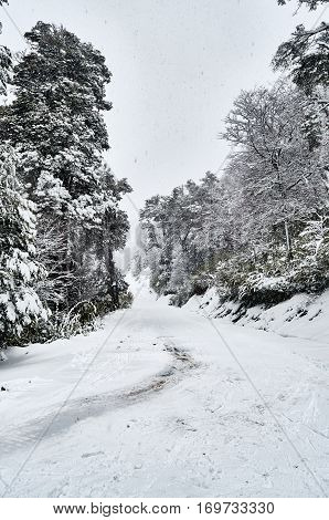 A Snowy Road Surrounded By A Snowy Forest