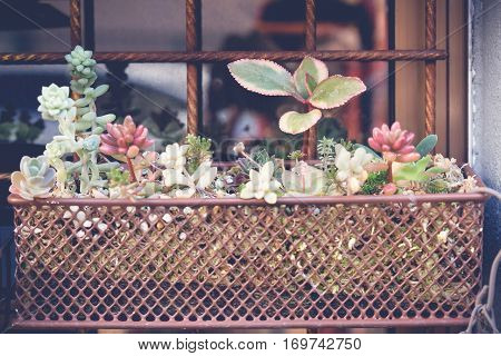agave succulent plant pots hanging wall home decor selective focus toning