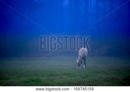 Horse grazing on foggy moonlit night