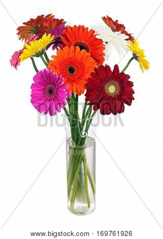 Bouquet from multi colored gerbera flowers in glass vase arrangement centerpiece isolated on white background.