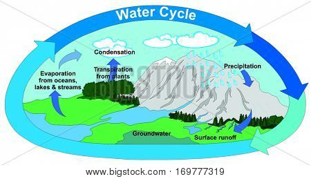 Vector Water Cycle in Nature with all part precipitation surface runoff groundwater evaporation transpiration condensation clouds mountains rivers lake trees forest  lawns arrows circulation