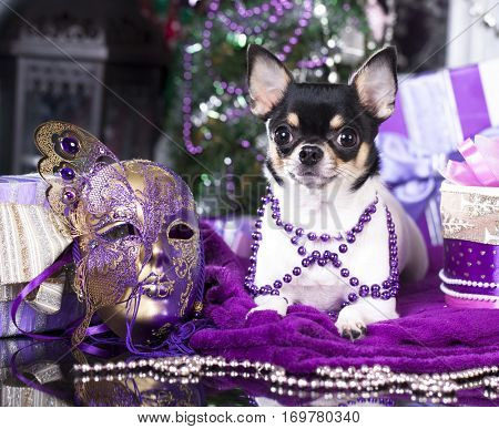 Carnival Mask and dog