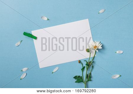 Spring top view composition: slanted blank stationary template / invitation mockup scattered petals around white flower with green stem clothespin. Sky blue background with copy space for text. Flat lay.