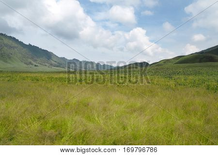 Grass Field