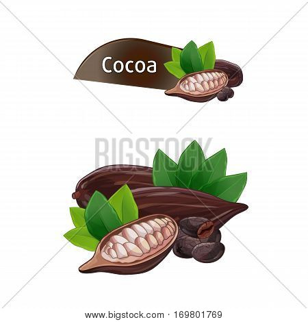Cocoa pod and bean with green leaves set isolated on white background vector illustration. Chocolate dessert component, cocoa powder ingredient. Cocoa pod, seed or bean whole and shelled collection.