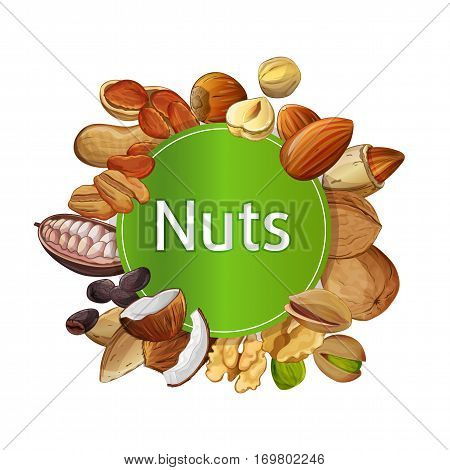 Various nuts round composition isolated on white background vector illustration. Pecan, almond, coconut, walnut, cocoa pod, hazelnut, peanut set. Organic food ingredient, traditional vegetarian snack