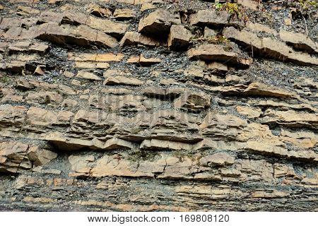 Close up view of big rock in forest