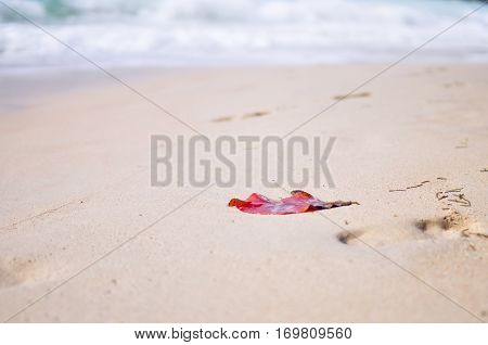Lonely abandoned red leaf driven ashore on the white sand as a conceptual background
