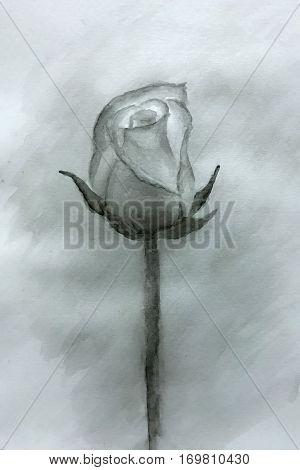 Single black rose watercolor painted- Watercolor rose original painting