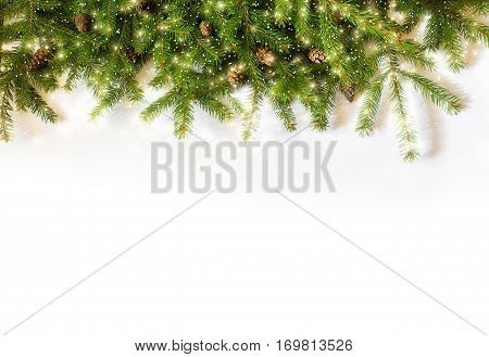 spruce branches on white background concept design
