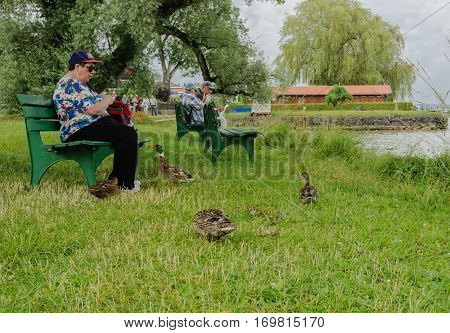 Fraueninsel, Chiemsee, Germany - July 2016:  One of the ducks that live on the