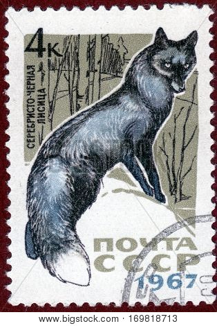USSR - CIRCA 1967: Postage stamp with a picture of silver-black fox, from the series