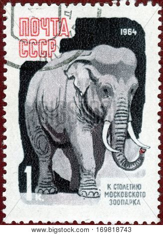 USSR - CIRCA 1964: Postage stamp printed in USSR with a picture of a Elephant from the series