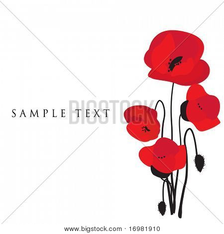 Vintage greeting card with poppy flower. Vector illustration.