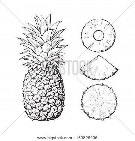 Whole pineapple and three types of slices - round peeled, unpeeled, wedge, sketch style vector illustration isolated on white background. Realistic hand drawing of whole and sliced pineapple