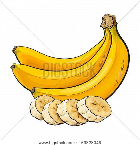Bunch of three unopened, unpeeled ripe bananas and banana chopped into pieces, sketch style vector illustration isolated on white background. Realistic hand drawing of ripe banana bunch and slices