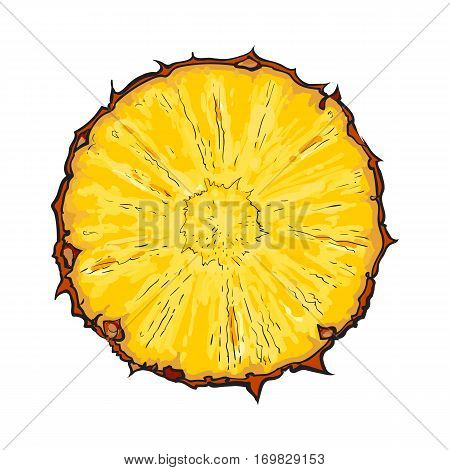 Unpeeled round pineapple slice, top view, sketch style vector illustration isolated on white background. Realistic hand drawing of fresh, ripe pineapple slice, half pineapple