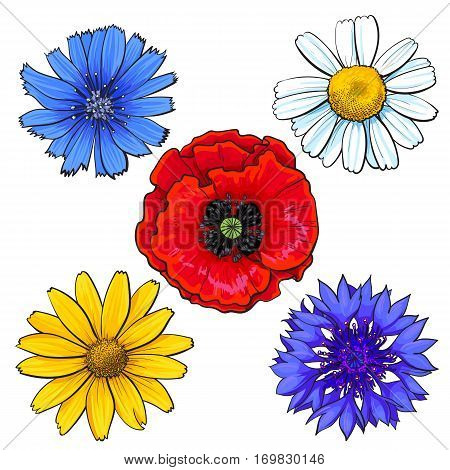 Set of wild, field flowers - poppy, chamomile, cornflower, daisy, sketch vector illustration isolated on white background. Realistic hand drawing of wild, field flowers, top view, decoration elements