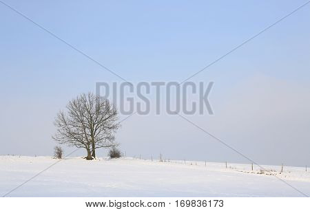 Winter landscape with single tree Saxony Germany