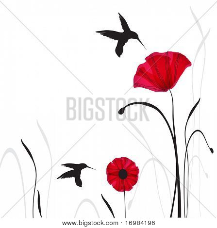 Hummingbirds and poppies flowers