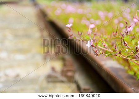 Old Railroad
