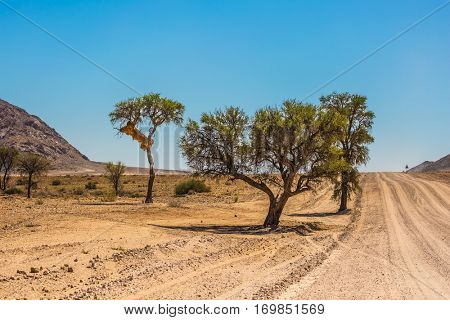Dirt road in the Namib desert endless. At a roadside tree - big nest tropical bird - finch. The concept of exotic tourism