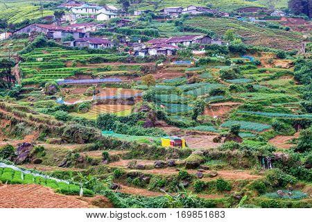 Sri Lankan mountain village where peasants working on tea plantations live