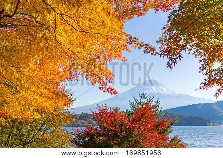 Mount fuji at lake with maple