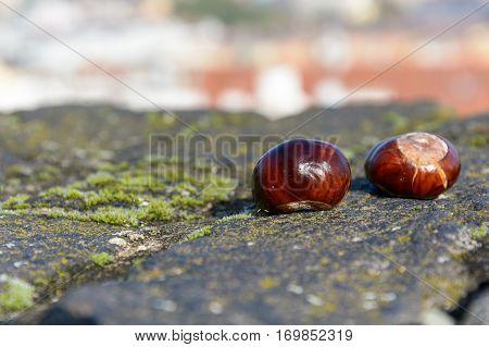 Chestnuts On The Wall