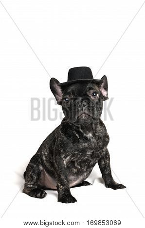 smiling French bulldog puppy wearing a hat portrait over white background