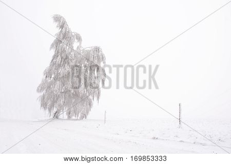 Lone Snowy And Frosted Tree On The Plain