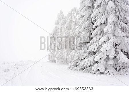 Snowy Road Lined With Trees Across The Plain