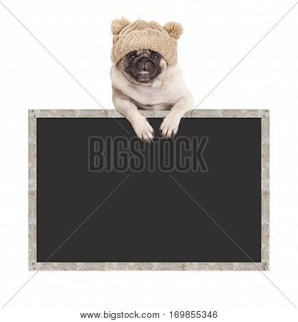 adorable cute pug puppy dog with knitted hat hanging with paws on blank blackboard sign with wooden frame