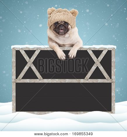 lovely cute pug puppy dog hanging with paws on blank blackboard sign with wooden frame wearing a knitted hat with pompons on snowy background