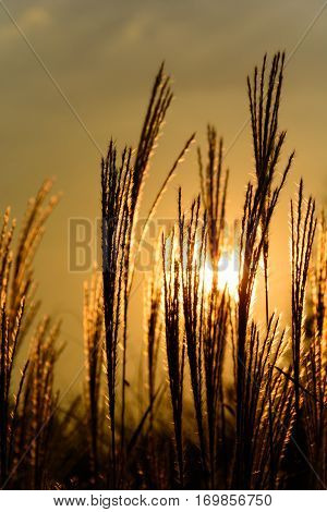Blades of grass bathed in the rays of the sun. Autumn still life. Grass backlit.