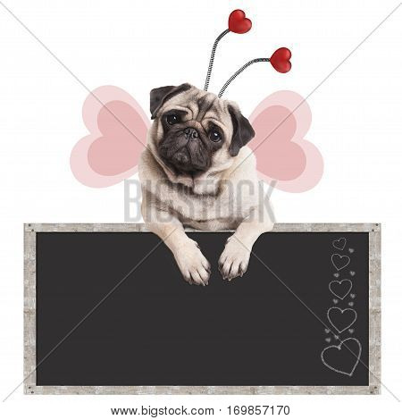 cute sweet pug puppy dog leaning with paws on blackboard promotional sign isolated on white background