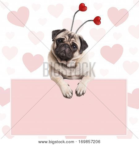 cute pug puppy dog with hearts diadem hanging on blank pale pink promotional sign